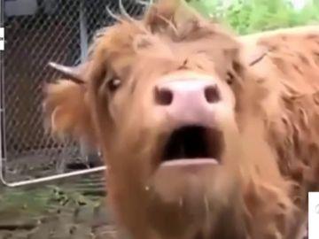 ¿Cómo suenan los sonidos animales pasados por 'autotune'?