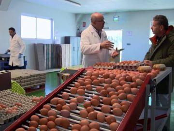 ¿Cómo puedo saber si estoy comprando huevos ecológicos? Te damos las claves
