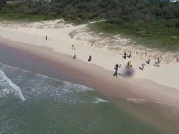 Un tiburón ataca a un surfista en Sidney