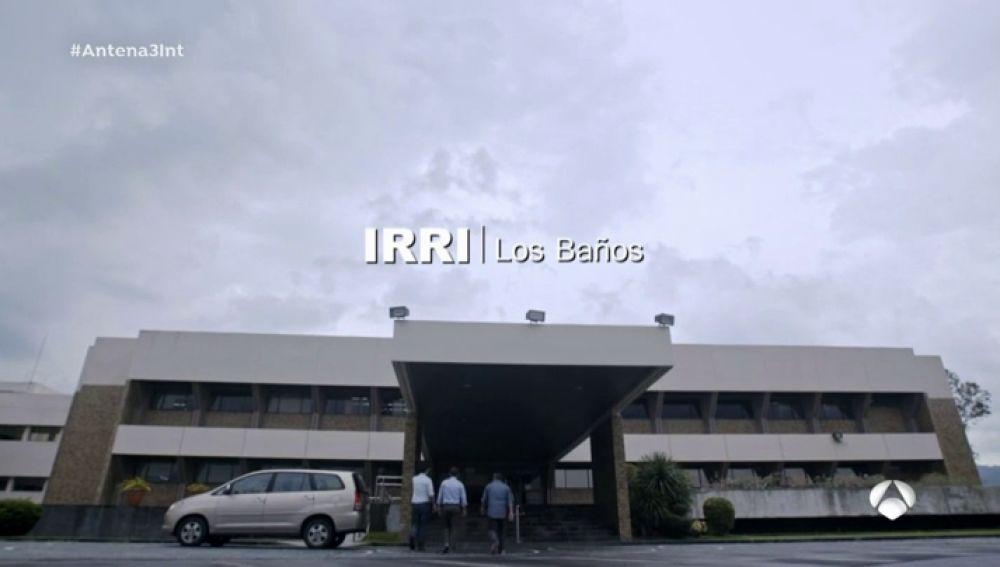 La garantía del arroz, en 250 hectáreas con semillas de más de 120 países