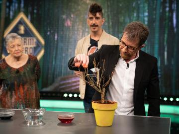 María Galiana alucina con las flores de cera de Marron