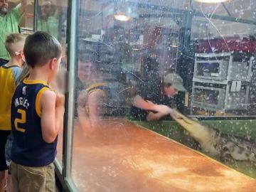 Una cuidadora es atacada por un caimán en Estados Unidos